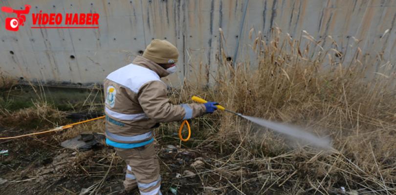 Haliliye'de Sivrisinek Kışlak Mücadelesi Devam Ediyor