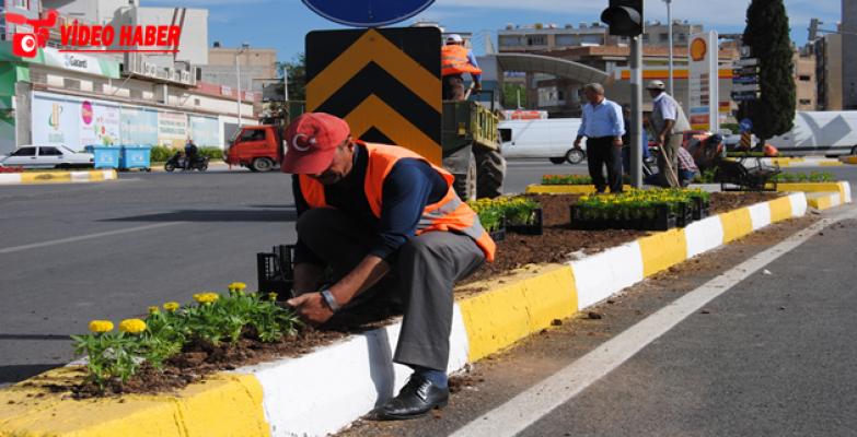 Büyükşehir, Şanlıurfa'yı Çiçeklerle Donatıyor