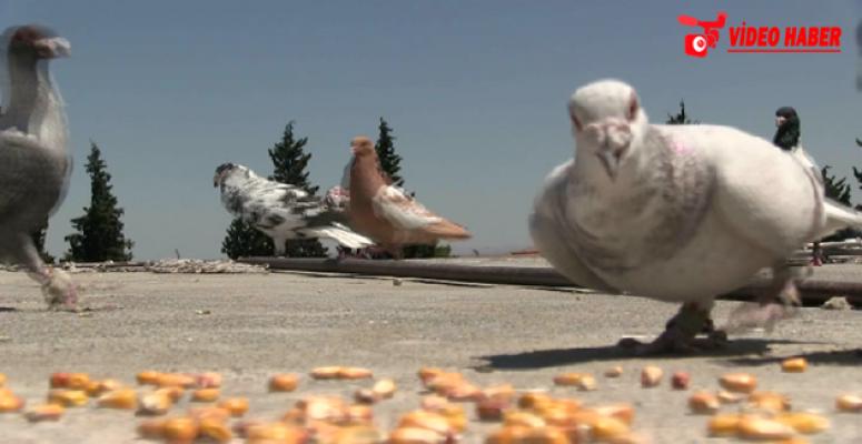 Urfa'da kuş sevgisi