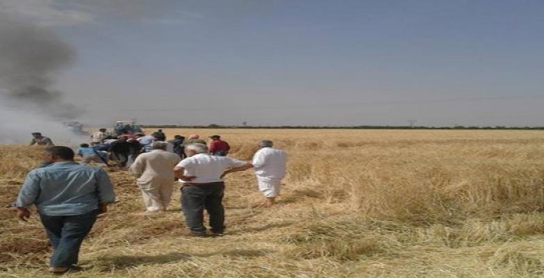 Şanlıurfa'da buğday tarlası yandı