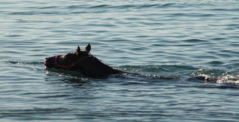 Atlarda Sıcak Havadan Etkilendi