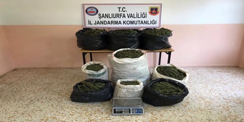 Şanlıurfa'da 83 Kilo Esrara 3 Gözaltı