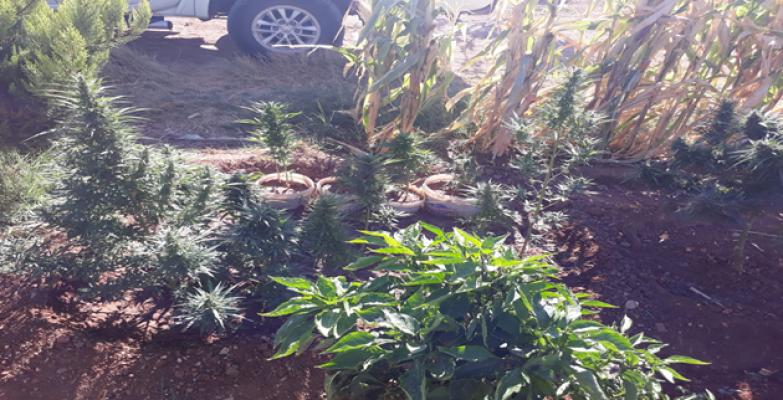Urfa'da Uyuşturucu Operasyonu, 1 Gözaltı