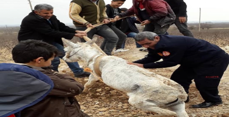 Harran'da Eşek Kurtarma Operasyonu