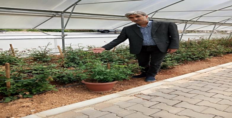 Halfeti' Ye Has Yeşil Gül Üretilmeye Başlandı