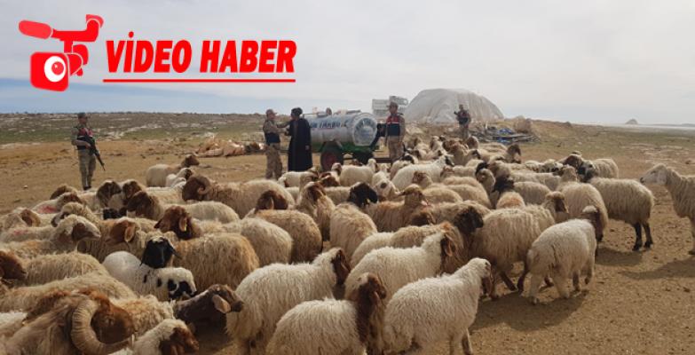 Urfa'da Koyun Hırsızlığı