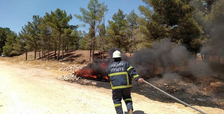 Osmanbey yerleşkesindeki  yangın ormanlık alana sıçradı