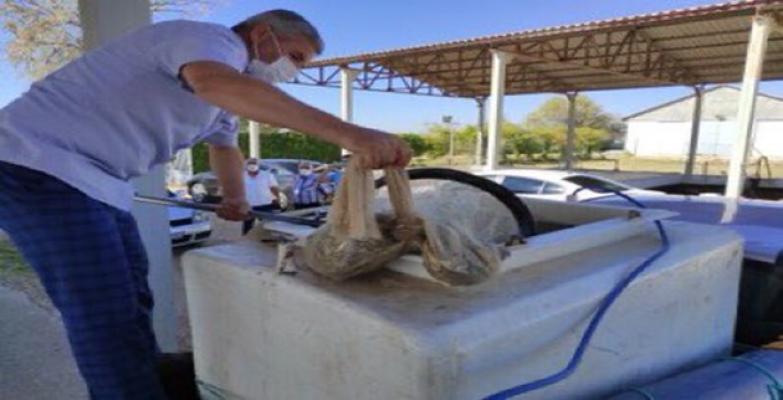 Urfa'da milyonlarca balık gölete bırakıldı