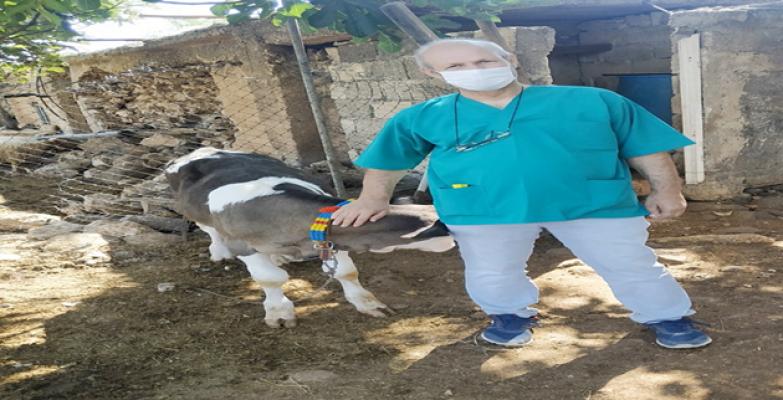 HRÜ Veteriner Fakültesi Sığırlarda Ölümlere Yol açan Hastalık İçin Aşı Çalışmasına Başladı