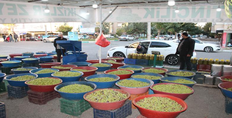 Yeşil Zeytin Satışları Başladı