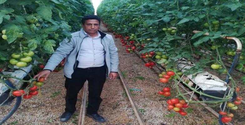 Urfa'da seracılık yaygınlaşıyor