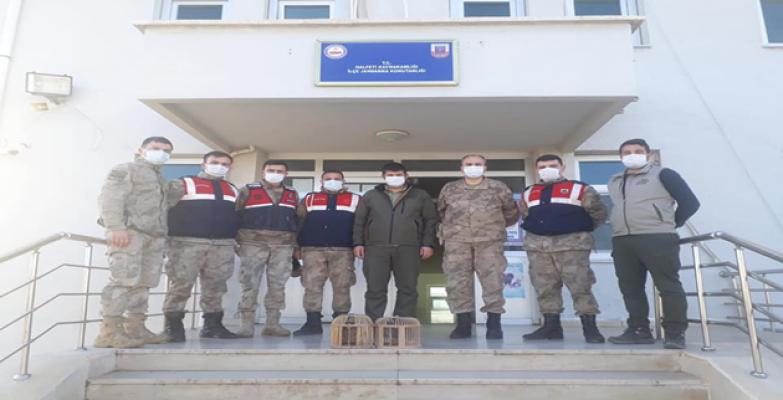 Şanlıurfa'da 11 kişi hakkında idari işlem yapıldı