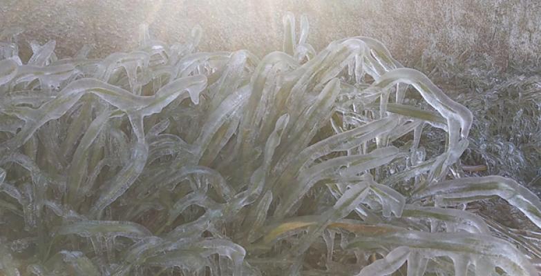 Urfa'da soğuk hava çiftçiyi vurdu