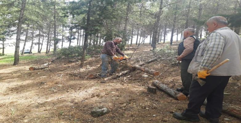 Ormanlara Bakım Çalışması Yapılıyor