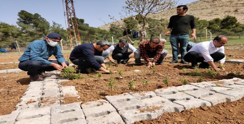 Urfa'da Tıbbi bitkiler koleksiyon bahçesi dikimİ gerçekleşti