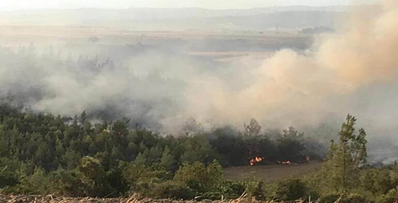 Orman yangınlarından kahreden haber! Ölü sayısı arttı