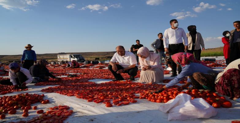 Siverek'te yüzlerce kurutulmuş domates üretiliyor