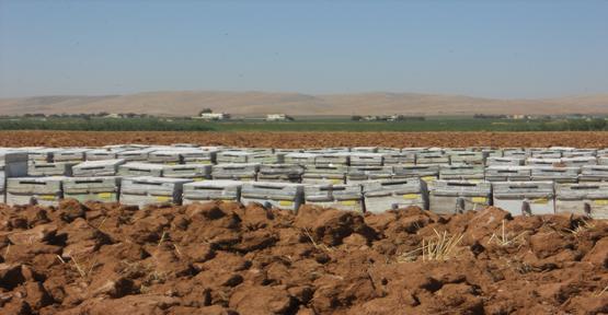 Arı üreticileri Urfa'yı seçti