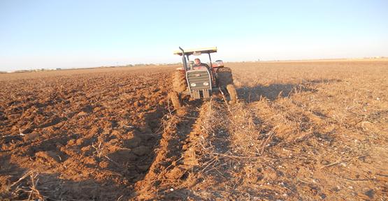 Çiftçi ekimde kararsız