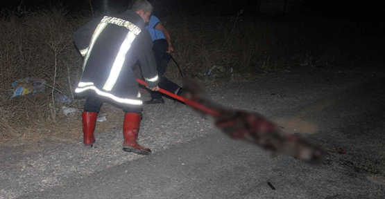 Eşek Kazaya Neden Oldu 1 Kişi Yaralandı