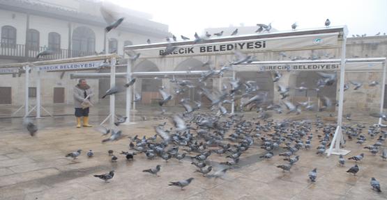 Güvercinlerle Arkadaş Olduk