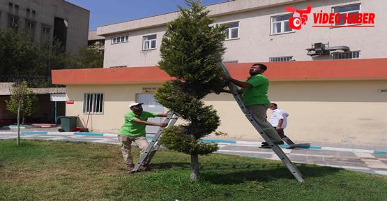 Haliliye'de Ağaçlar Yeni Şekillere Büründü