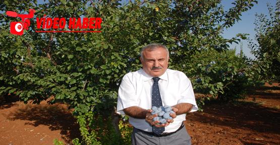 Harran Üniversitesi 20'inci kuruluş yılını kutluyor