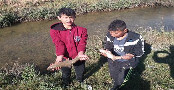 Harran'da balık sezonu başladı