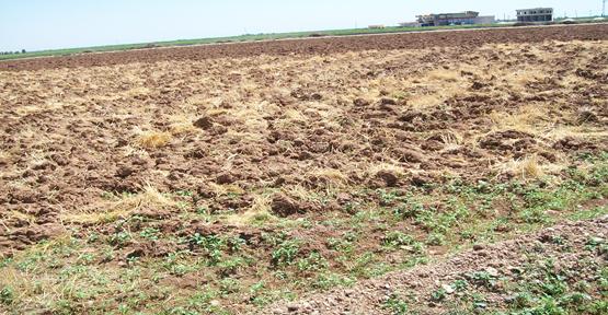 Mazot fiyatları çiftçiyi zor durumda bırakıyor