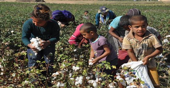 Mevsimlik işçilerin kaderi