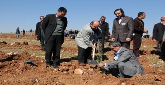 Osmanbey Kampüsüne 1500 Fidan Dikildi