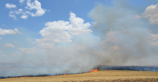 Suruç'ta anız yangını