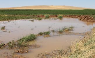 Urfa'da Alternatif Ürünler Ekilmeli