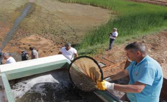 2018 Yılında 10 Milyon Yavru Balık Baraja Bırakıldı