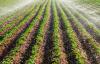 Çiftçiler damlama sistemine geçmeli