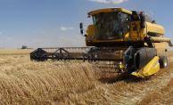 Şanlıurfa'da Buğday 1,12 Liradan Satıldı