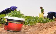 Mevsimlik İşçilerin Tarlada Çalışıp Oruç Tutuyor