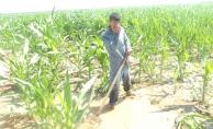 Urfa'da Tarla İşçilerin Zorlu İmtihanı