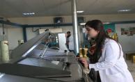 Urfa'da Organik Zeytin Üretiyor