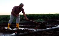 Gece Sulamasında Sezonda 2-3 Sulama Tasarrufu Sağlanıyor