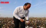 Çiftçi, Harran Ovasında Pamuk Topladı
