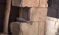 Şanlıurfa Valiliği Açıkladı, 2 Şehit, 46 Yaralı