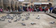 Dergah'ın vaz geçilmesi kuşlar