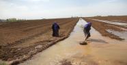 Desteklemede Borcu Olmayan Çiftçi De Mağdur