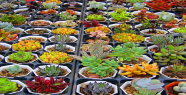 Hangi kansere hangi bitki?