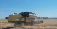 Harran'da hasat başladı