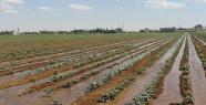 Sıcaktan Bunalan Çiftçiler Yöntemini Buldu