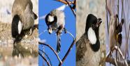 Urfa'da bir kuş türü daha