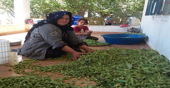 Urfa'da bamya satışları üreticiyi sevindirdi