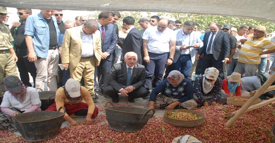 Urfa'da fıstık hasadına tam kadro